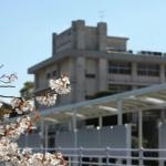 桜が綺麗な御井キャンパスです